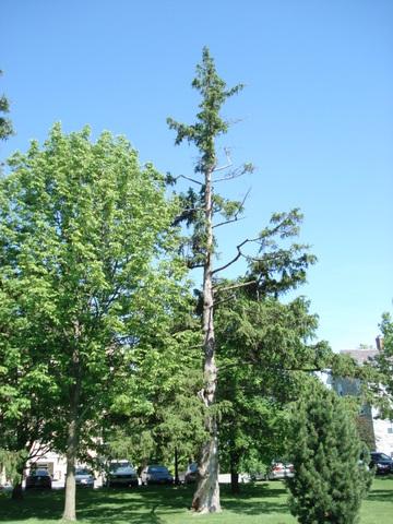 Tree number 2