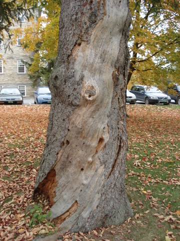 Wound on Tree Number Two