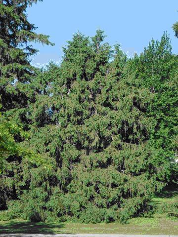 Tree number 5